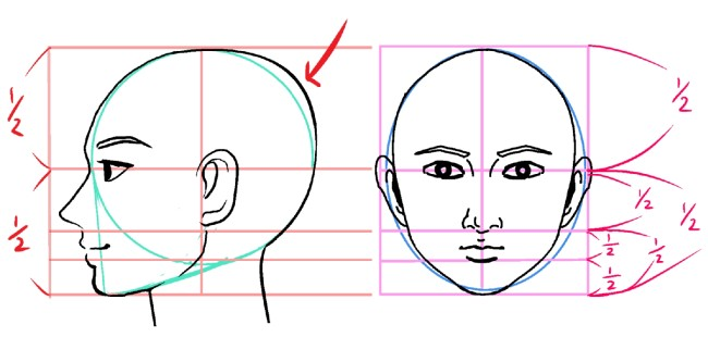 描き 方 横顔 美しい横顔はEラインにあり! 立体感を出せる顔の描き方